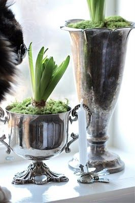 More trophies used as planters. I can picture these in my kitchen window sill and watching them grow over dishes!