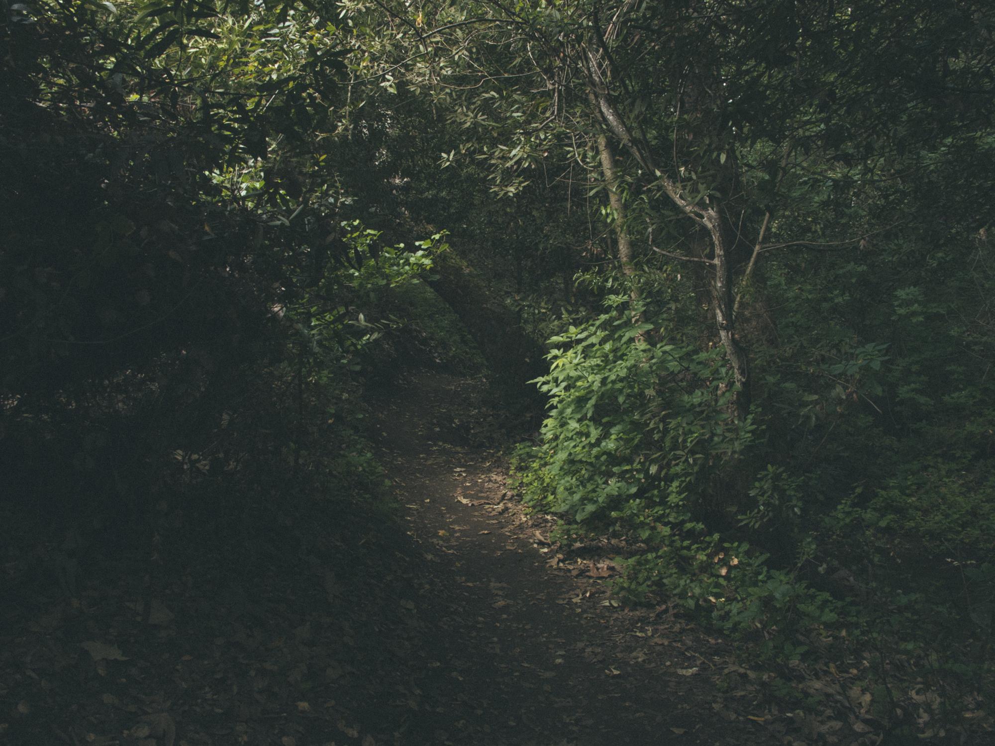 Woods-0833.jpg