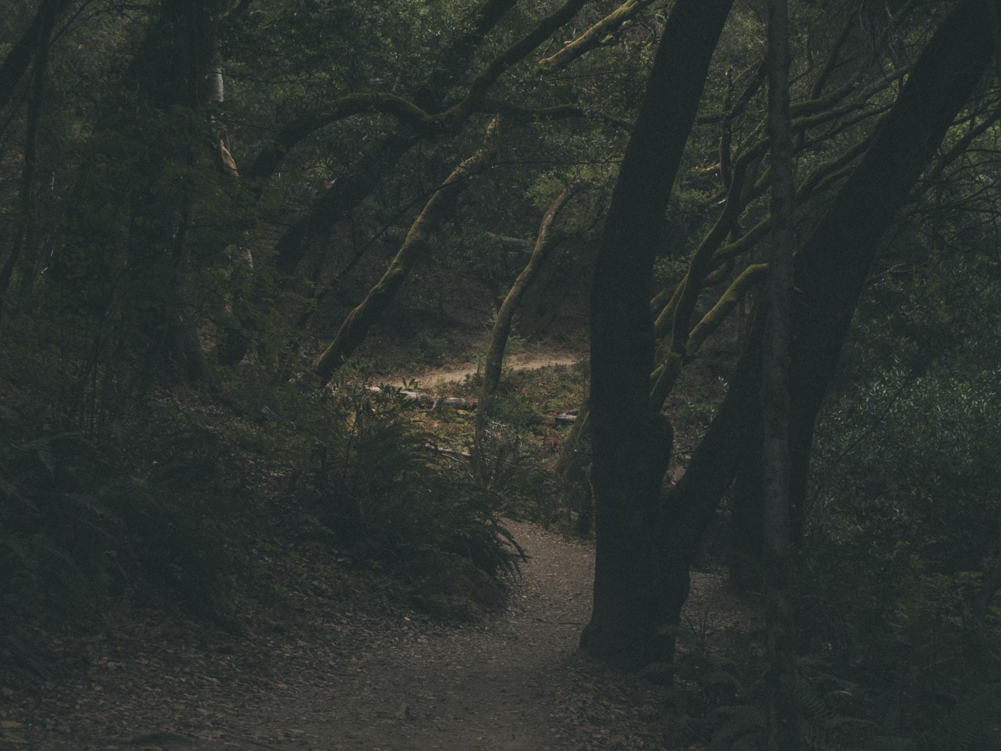 Woods-3067.jpg