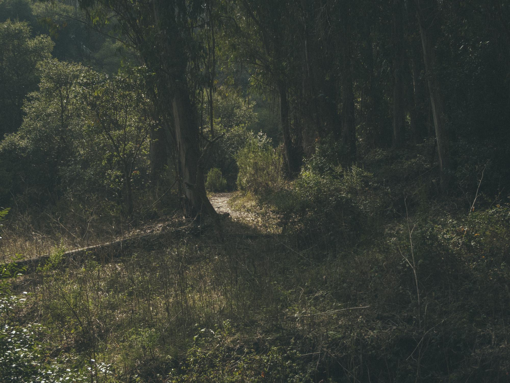 Woods-5395.jpg