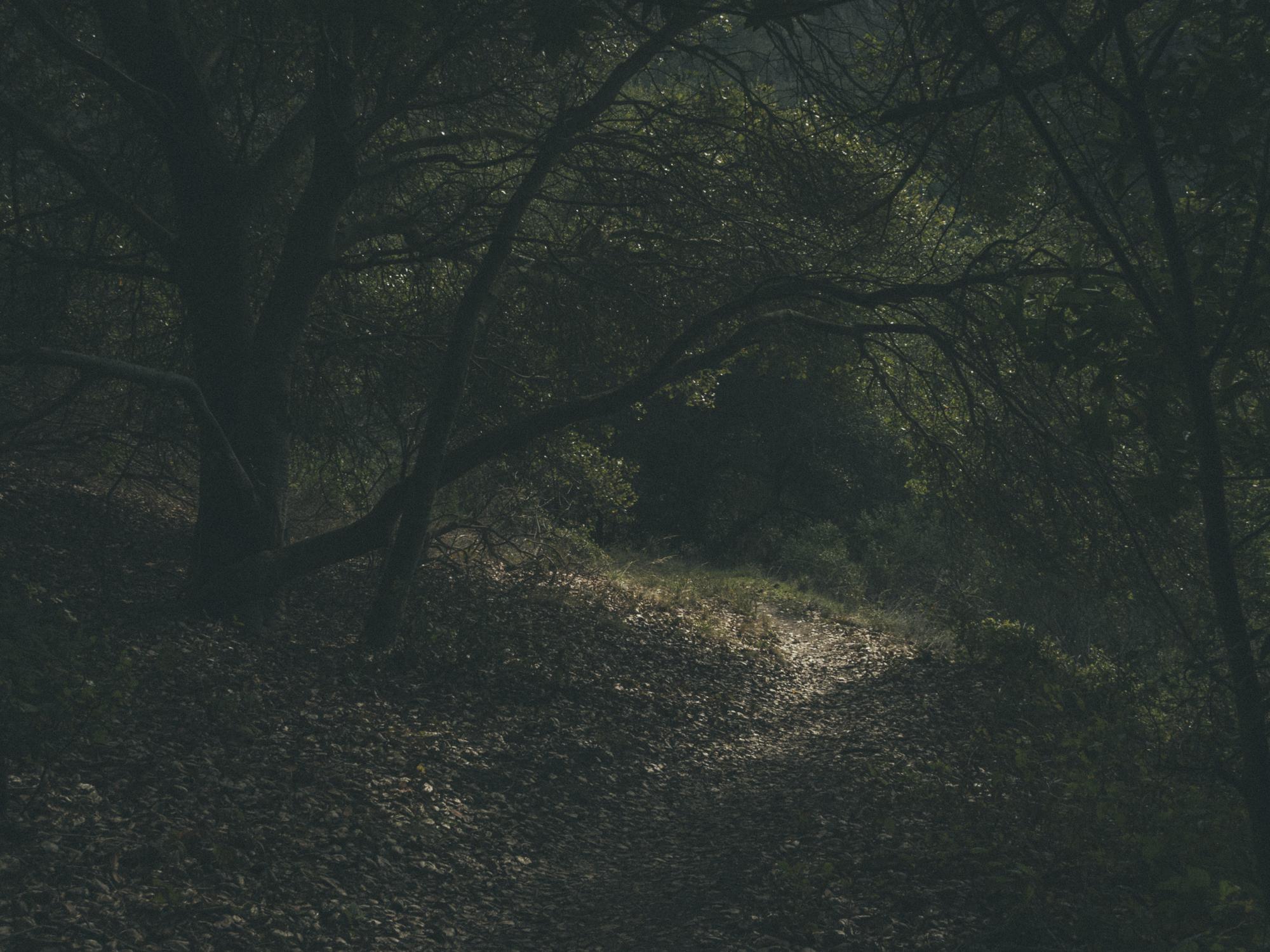 Woods-5448.jpg