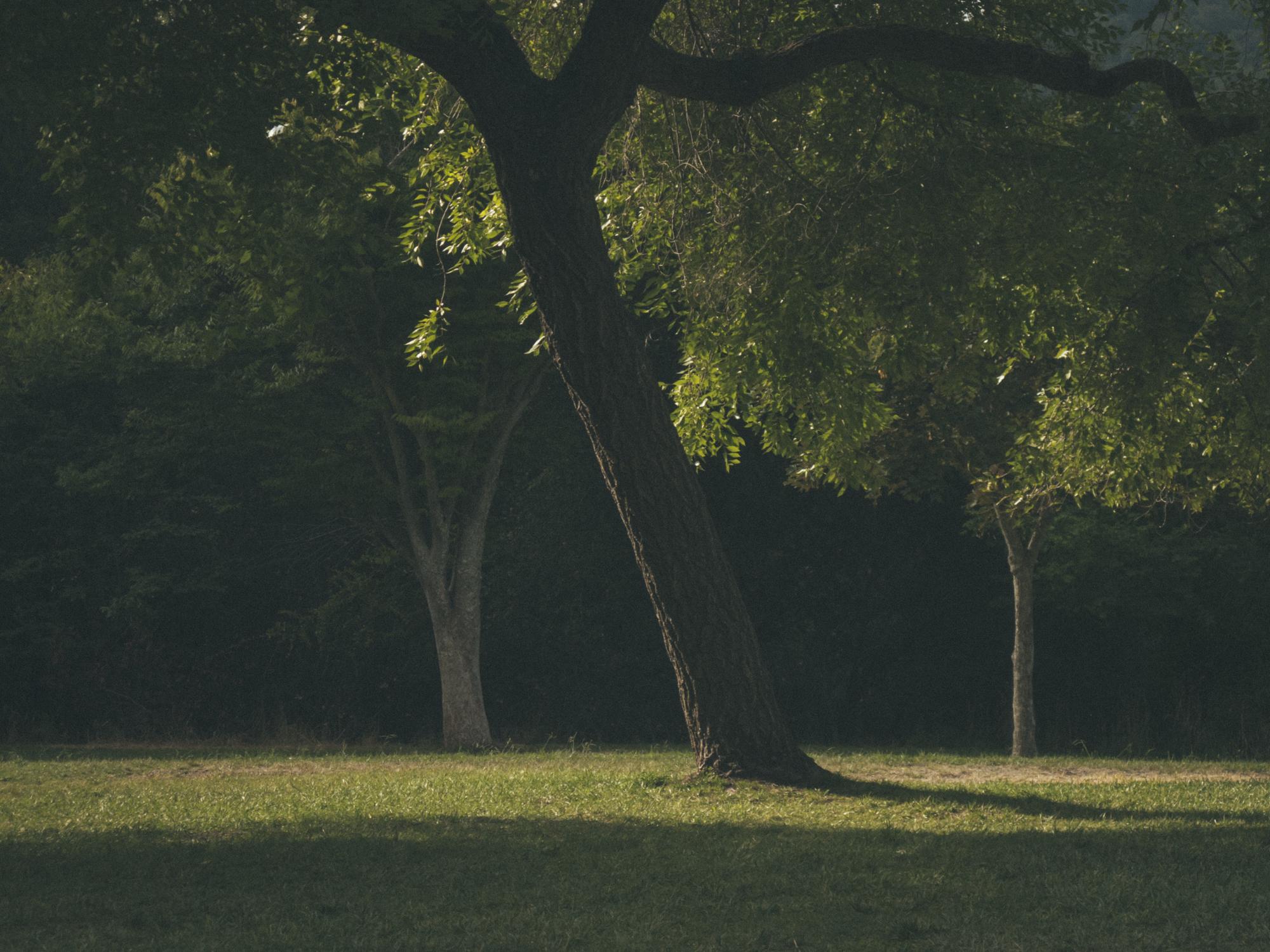 Woods-6273.jpg