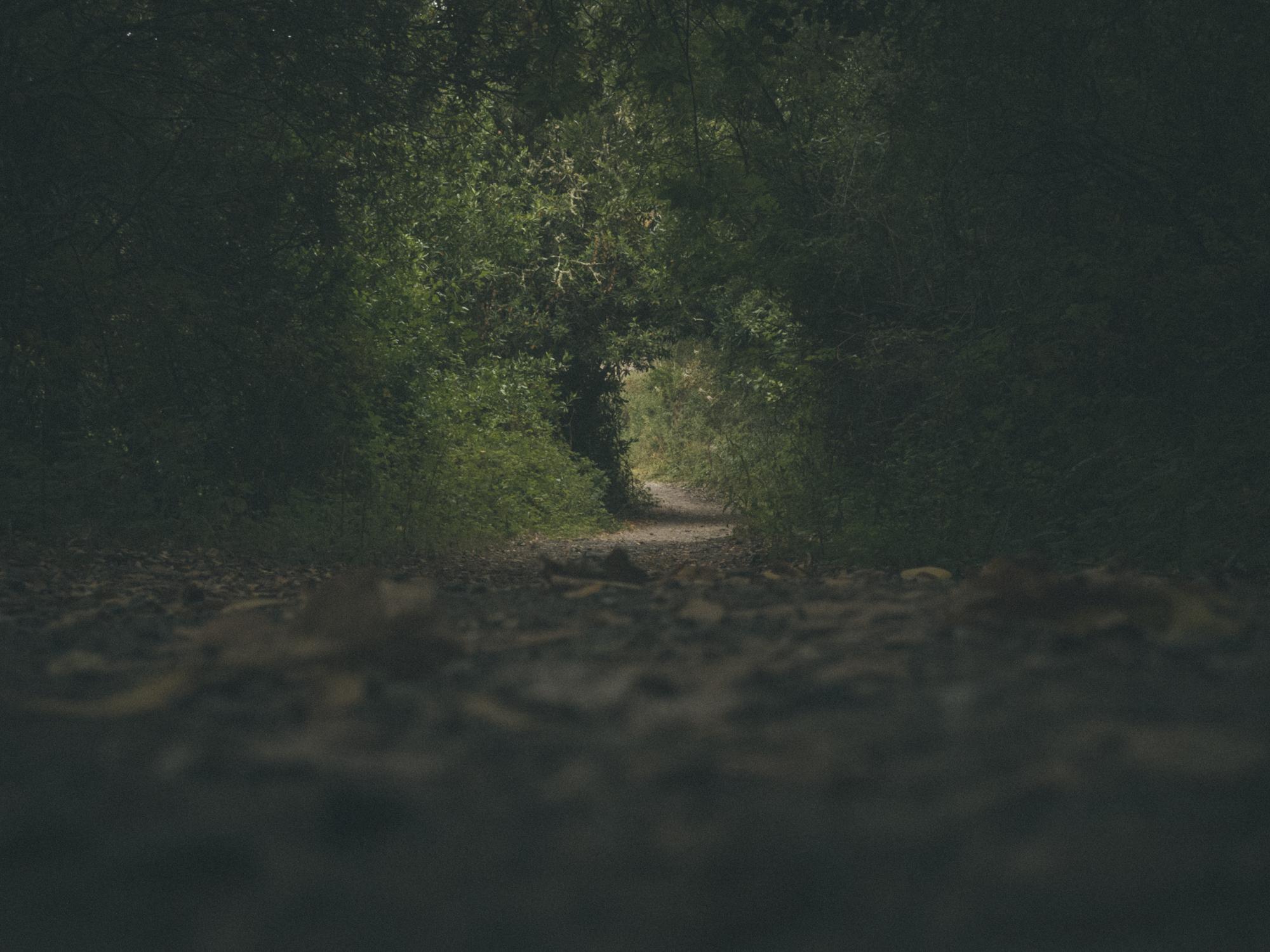Woods-8656.jpg