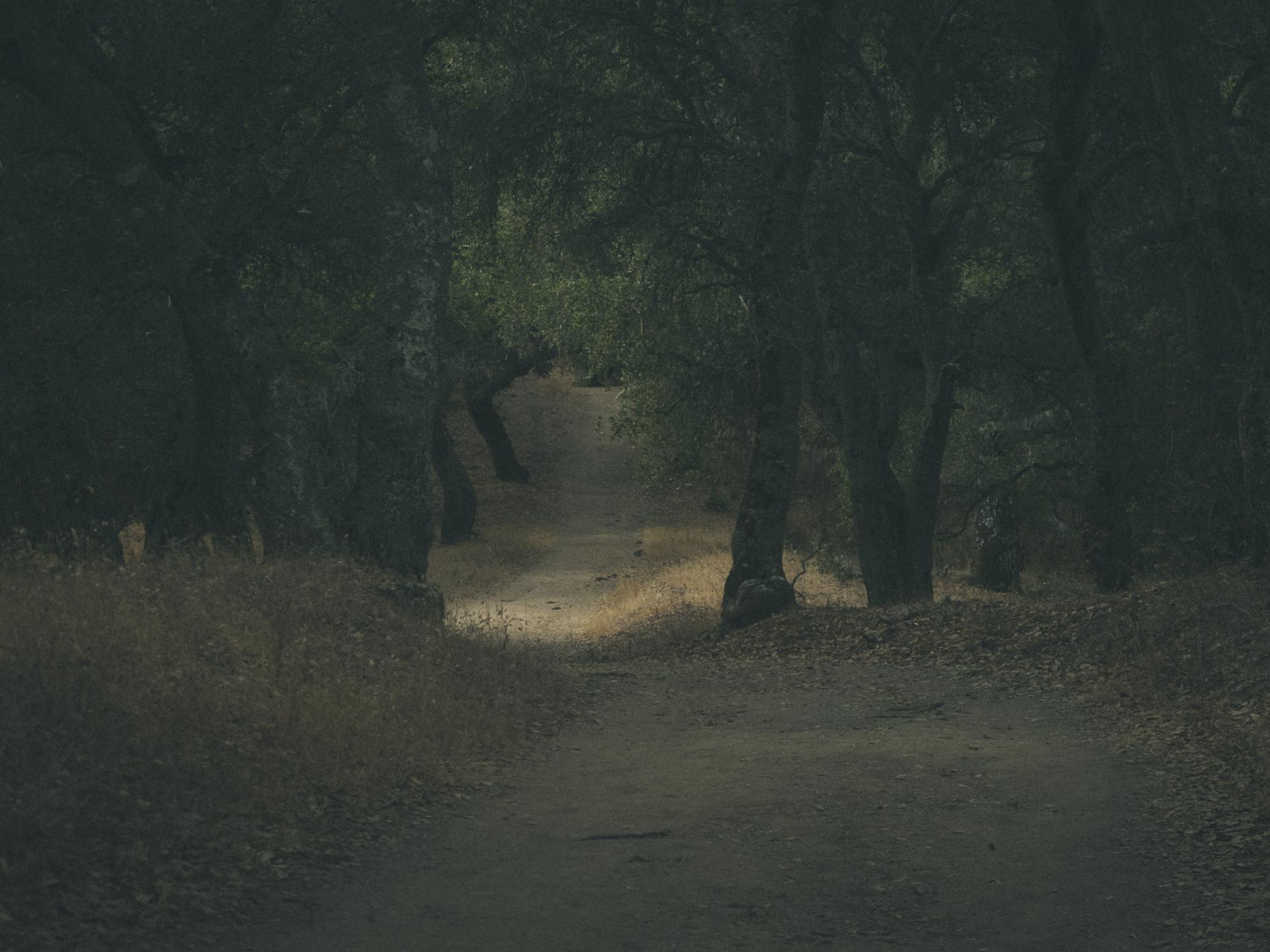 Woods-9127.jpg