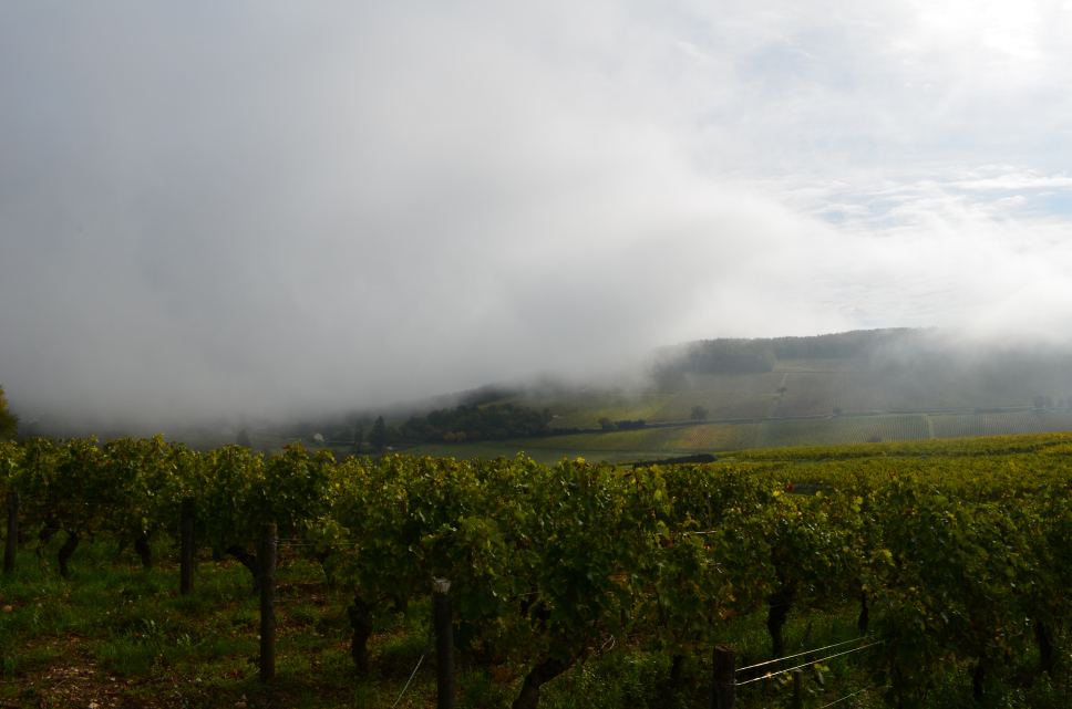 Seeing through the mist: early morning, Sancerre ©2015 Julie Christine Johnson