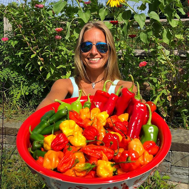 Today's Hot Pepper Harvest!!! Bring on the heat (and flavor of course)! I love all things hot and spicy so I grow over 20 varieties of hot peppers in my garden and here is the first big harvest of them. I have my work cut out for me as I'll turn these bad boys into hot sauce, hot pepper jelly and all kinds of other creations! Suggestions welcome as there are a lot more coming! The heat is on! #gardengoodness . . . . . . #homegrown #hotpeppers #organicgarden #organic #harvest #nature #montauk #goexplore #magicalmontaukair #stoked #hotandspicy #heat #ghostpepper #scorpionpepper #chili #jalapeno #habanero #peppers #scotchbonnet