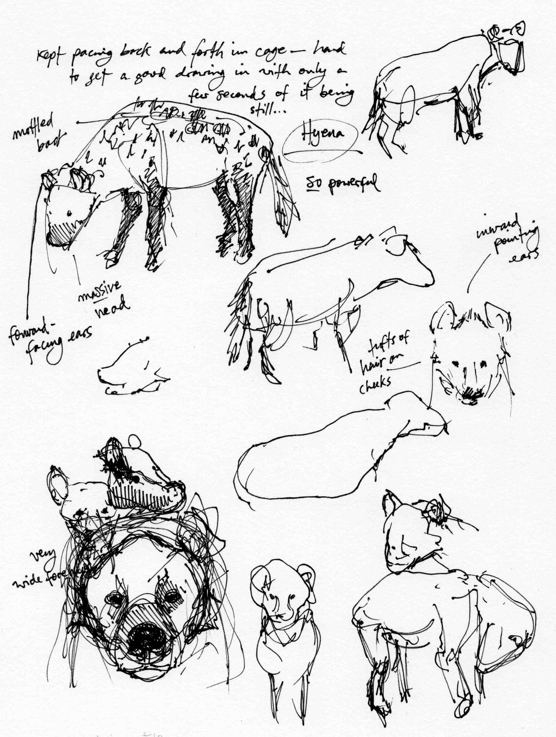 Hyena Studies
