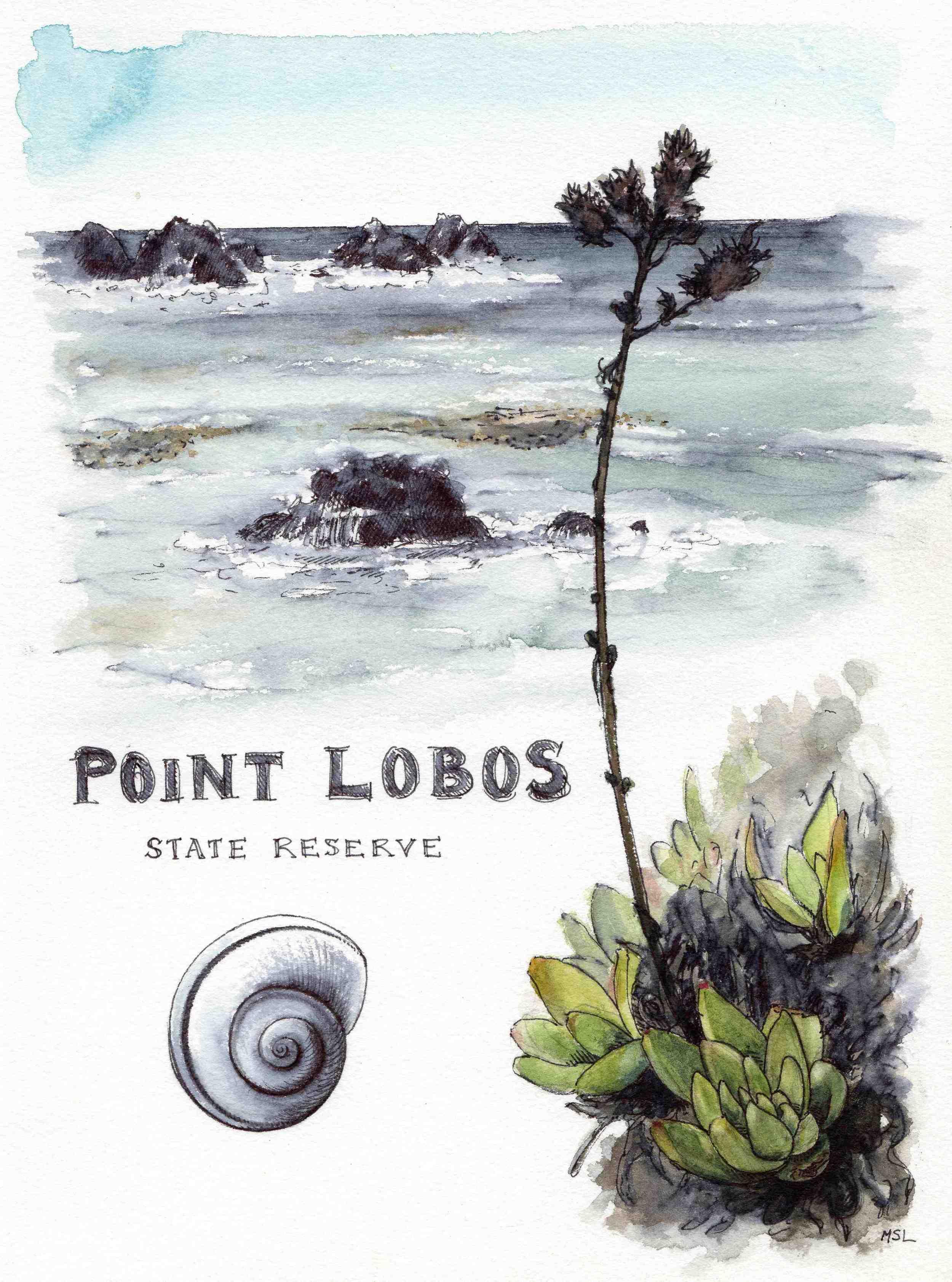 Point Lobos, Near & Far