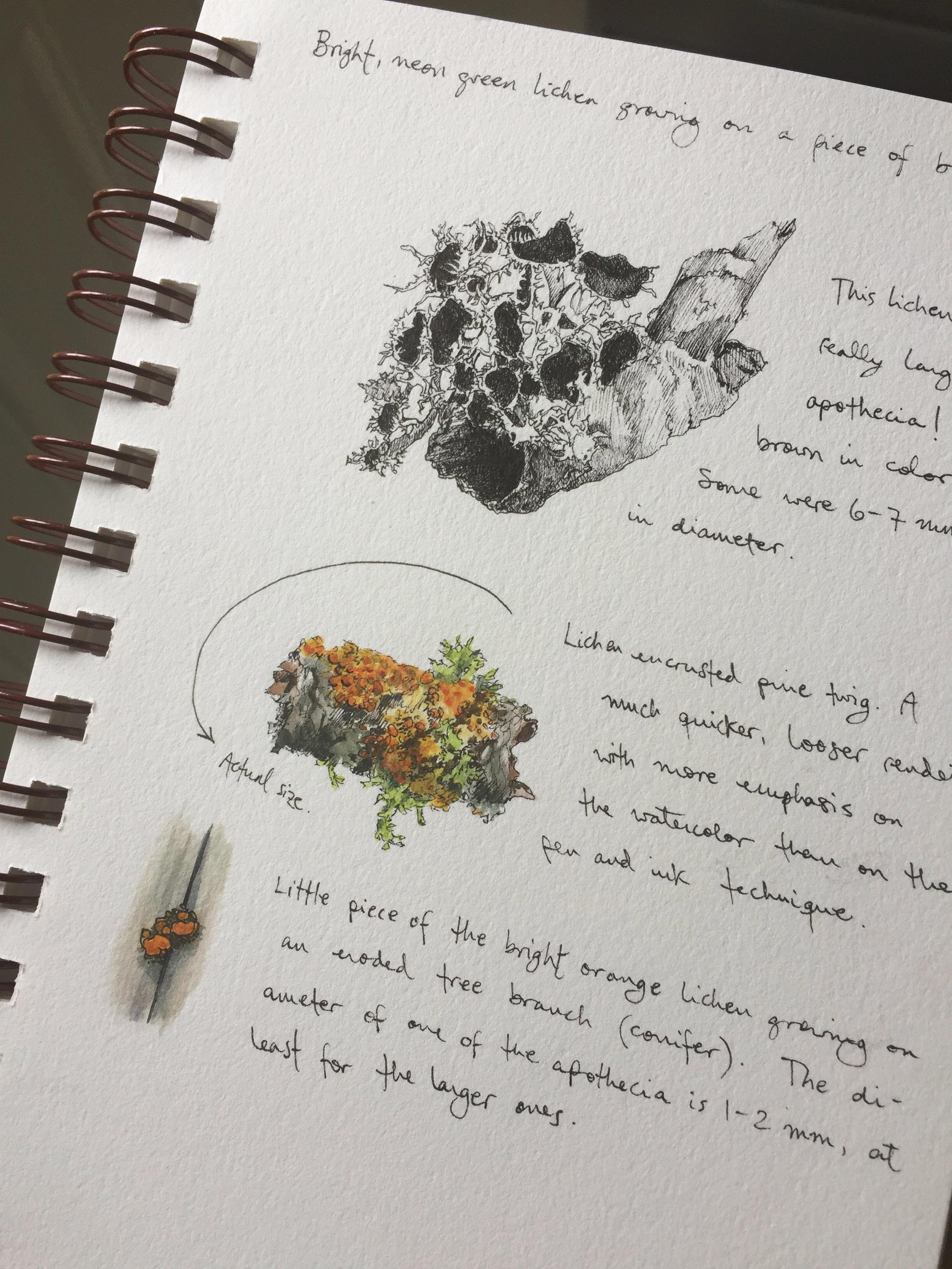 Lichen Study