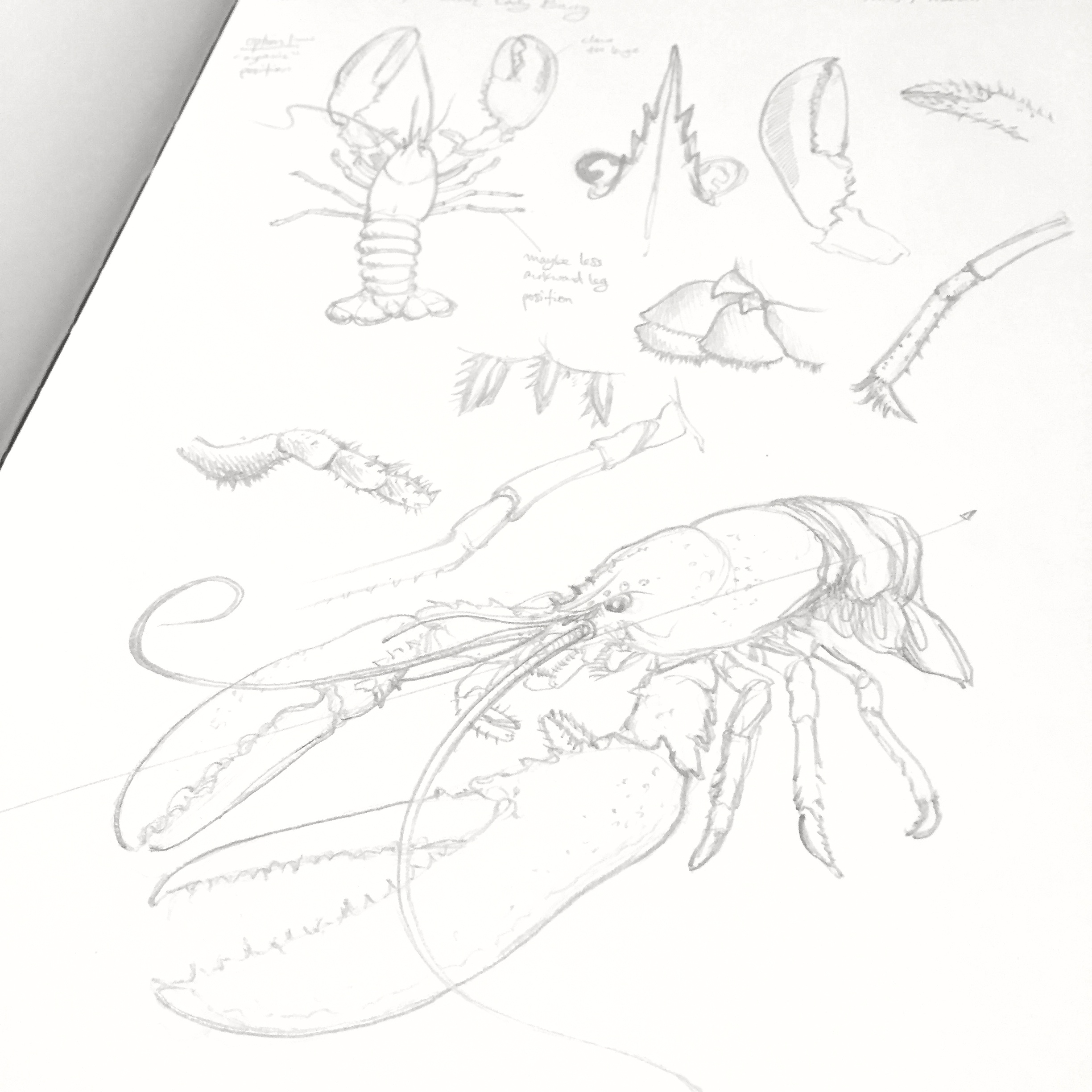 Lobster Studies