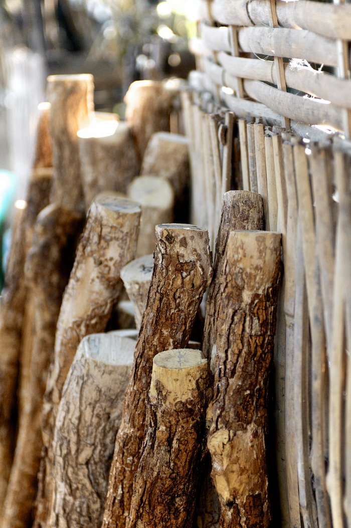 A collection of Thanaka logs is lined up at a local Yangon market. In some Buddhist communities, after the the dark, outer bark has been used, the leftover inner stem is donated by villagers for monk cremation ceremonies.
