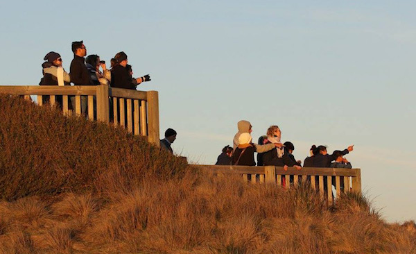 Whale spotting at Island Whale Festival, Phillip Island,VIC