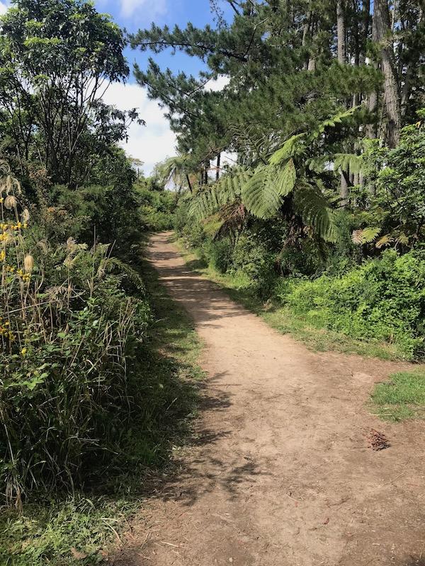 Rotorua forest trails.jpg