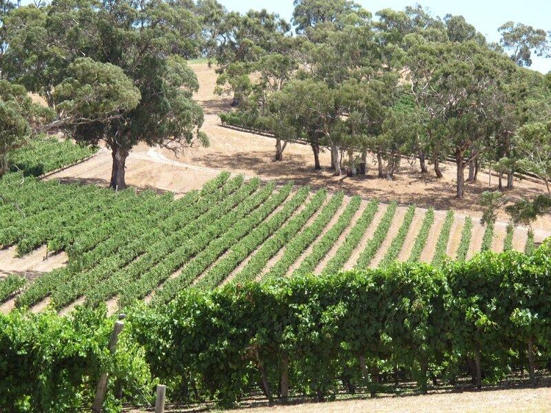 outdoor-vineyard-wine-field-country-summer-804932-pxhere.com.jpg