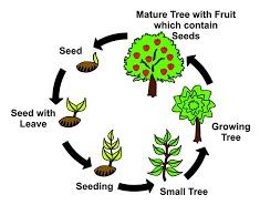 plant+life+cycle.jpg