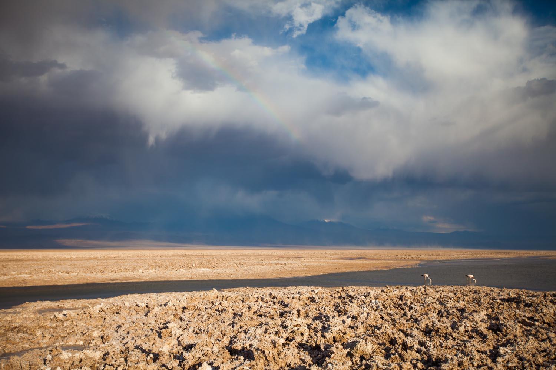 National Flamingo Reserve: Atacama Desert, Chile