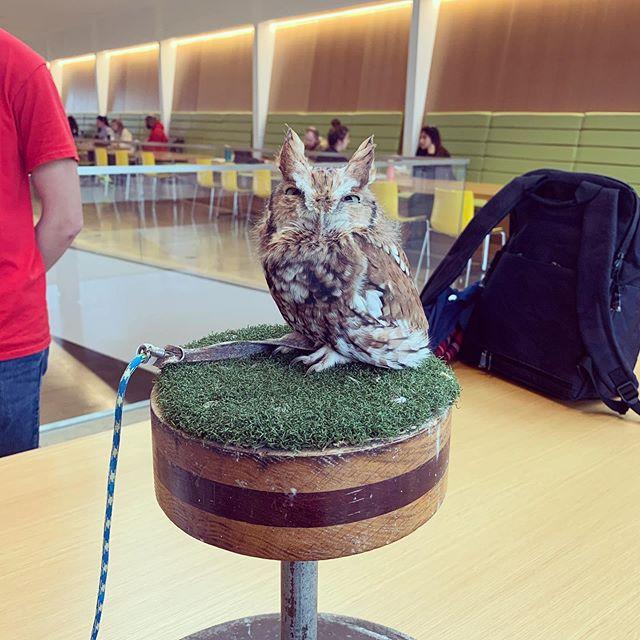 I met an owl today. . . .#cornellvetmed #cvm #cornell #owl #bakesale #mph #fall