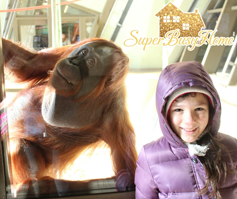 Winter Trip to the Indianapolis Zoo.  Super Busy at Home.