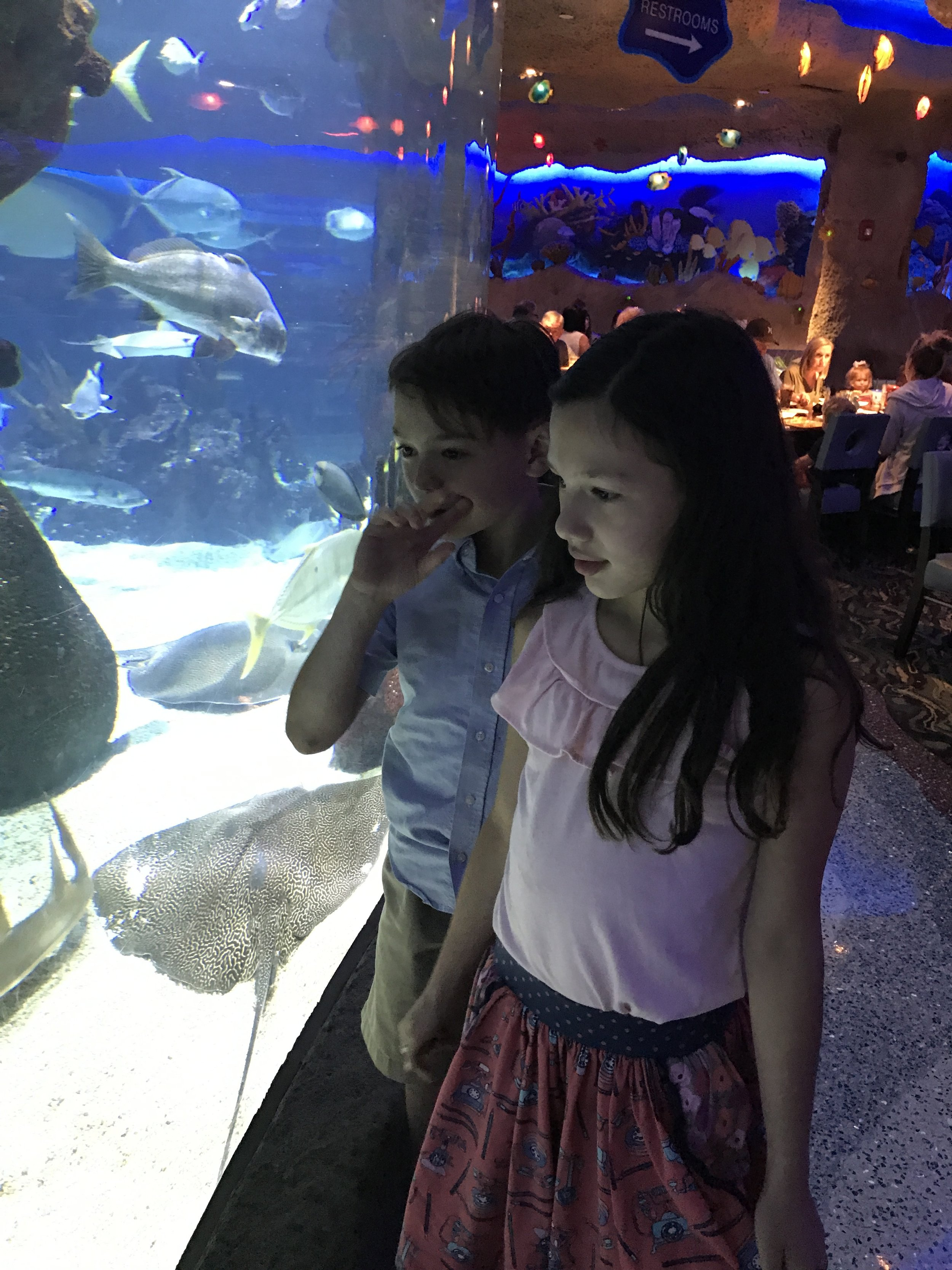 Great Kid Friendly Places to Visit in Nashville The Aquarium Restaurant,  so many fish.