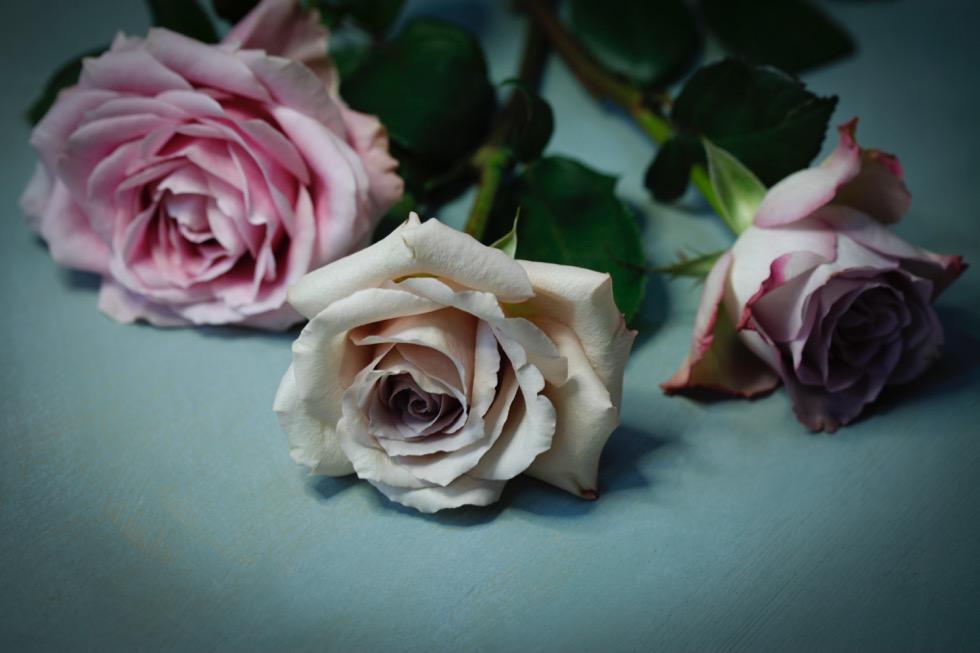 Gucci roses