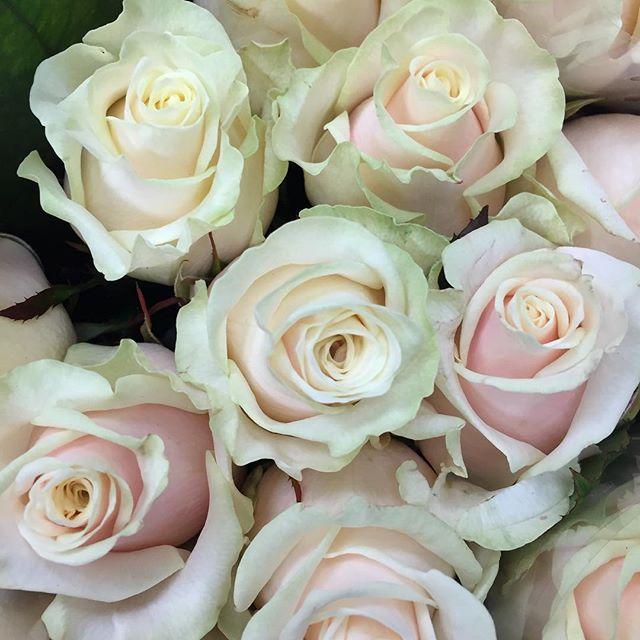 Talea roses at market ✨#rose #roses #talea #talearoses #florist #floristry #flowers