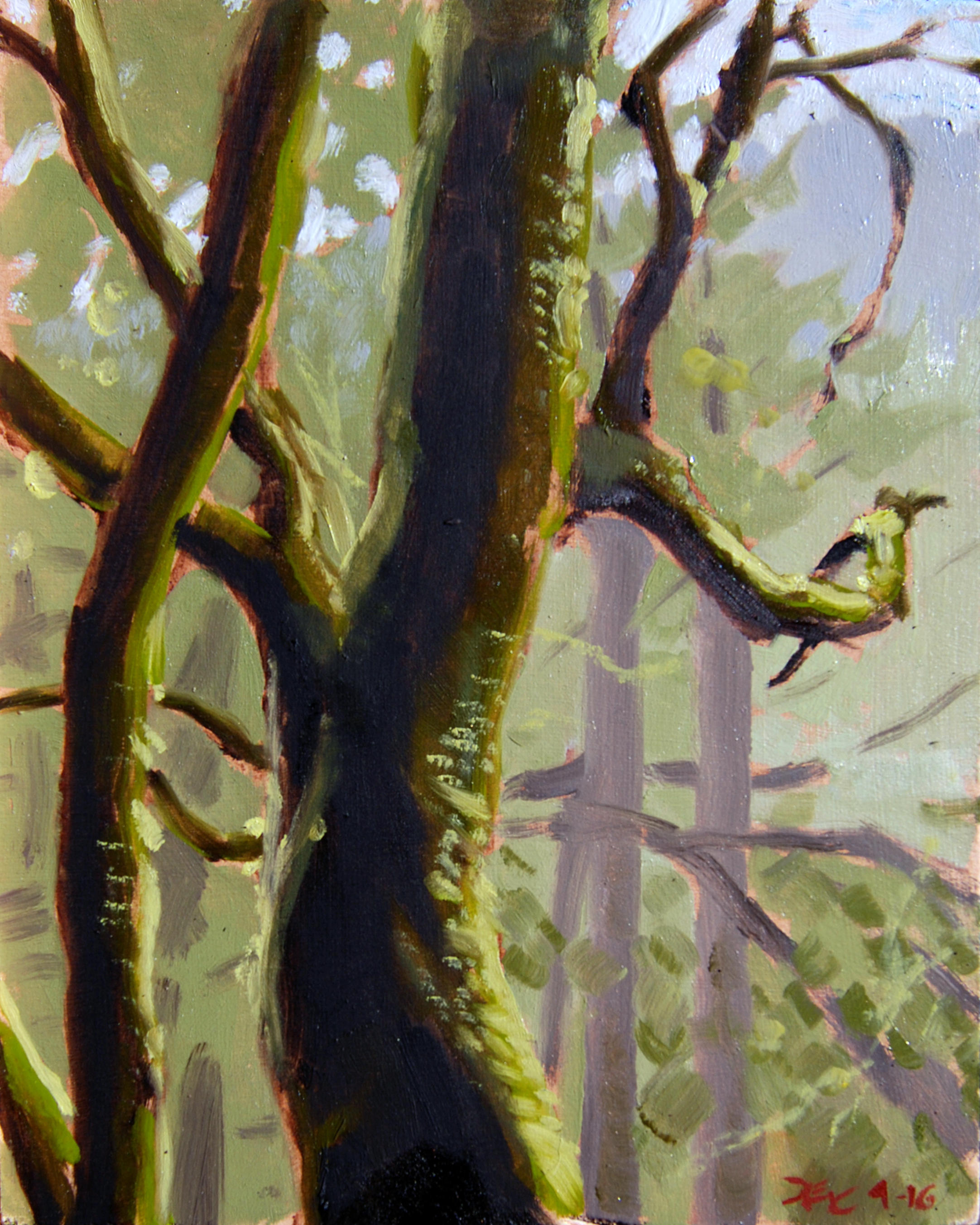 Tree with Moss , 10 x 8 in.  Oil on panel. Available for purchase. (2016)