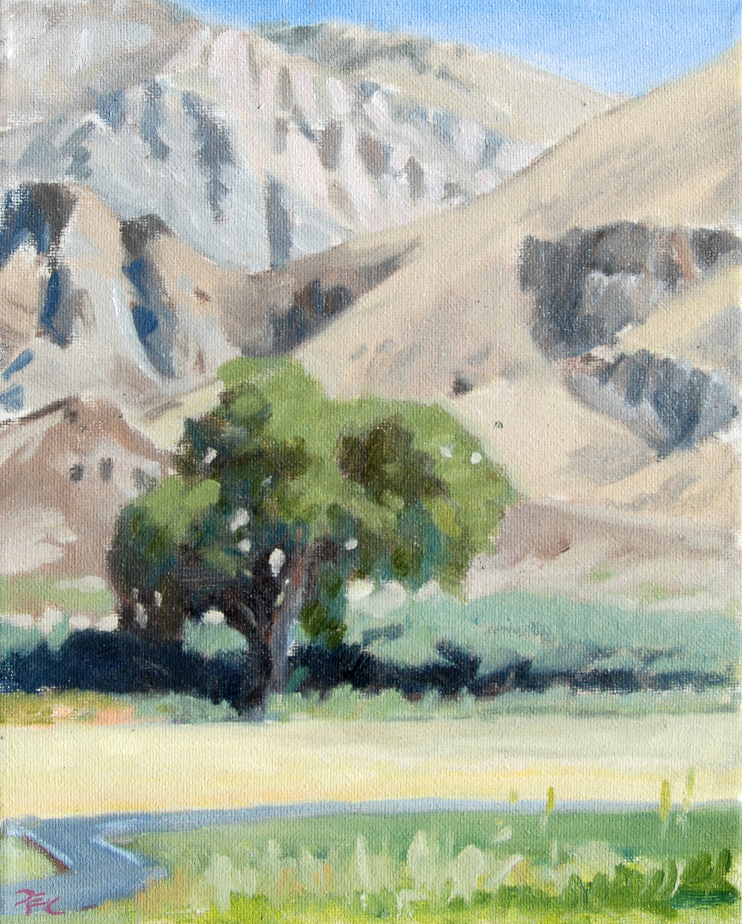 Cant Orchard Tree Study,  10 x 8 in.  Oil on canvas. Available for purchase.  (2016)