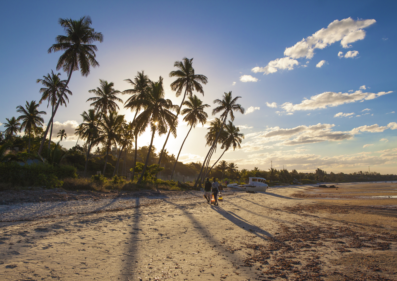 palm tree contrejour villanculos.jpg