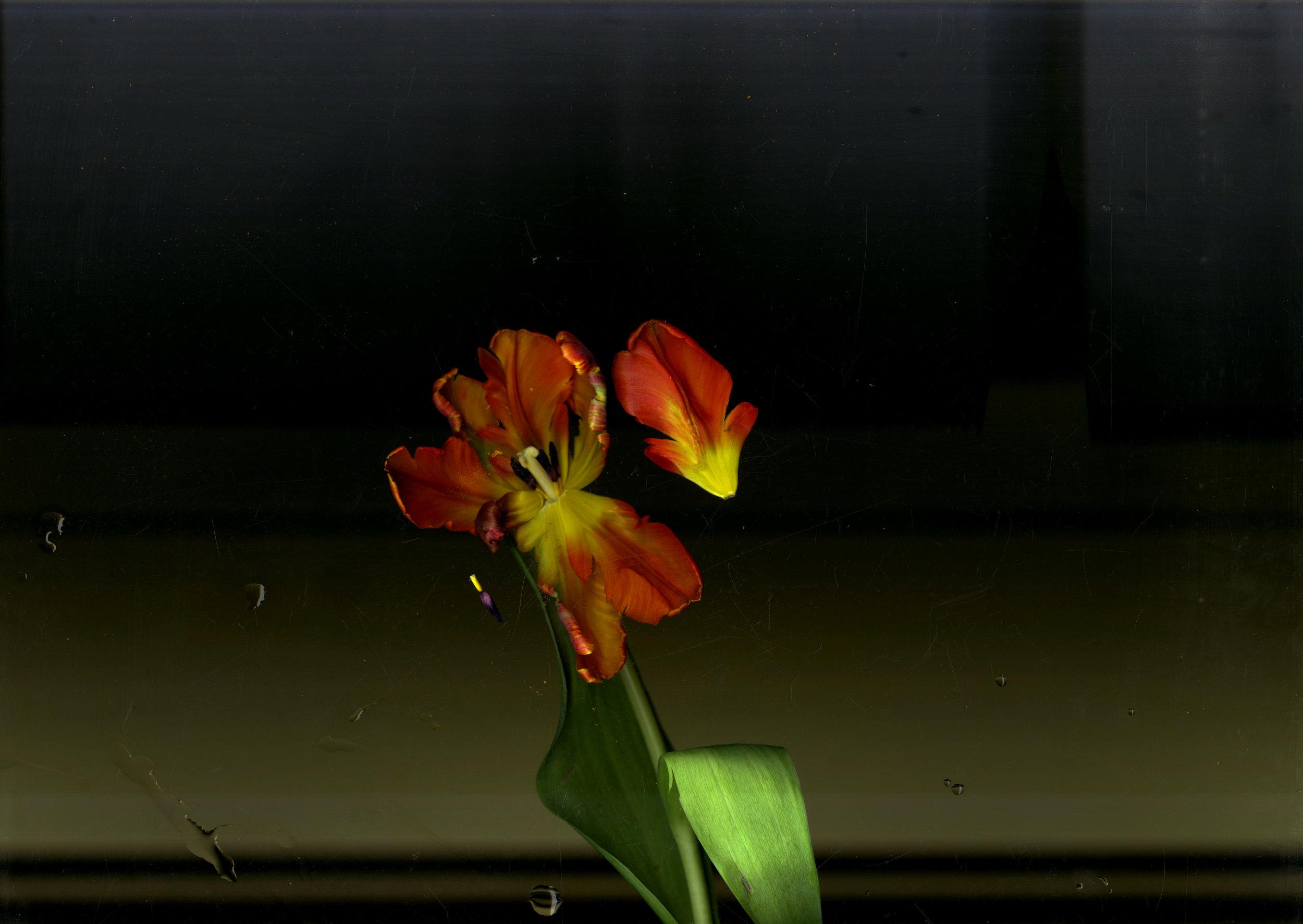 flower003.jpg