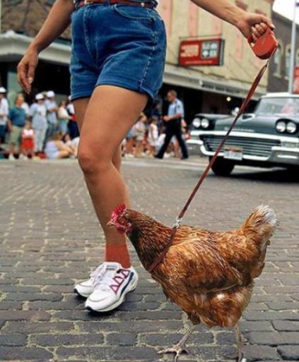 walking_chicken_1_540x.png