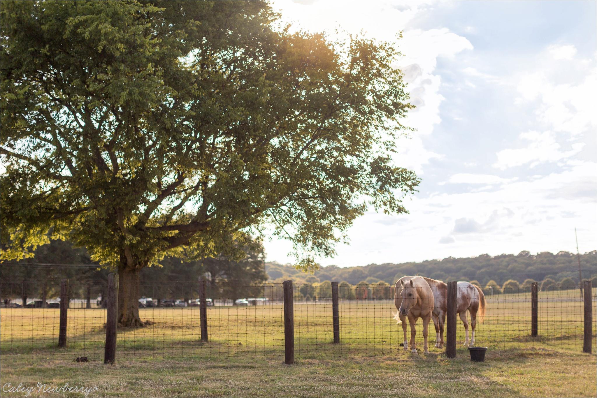 horse-at-wedding-huntsville-al.jpg
