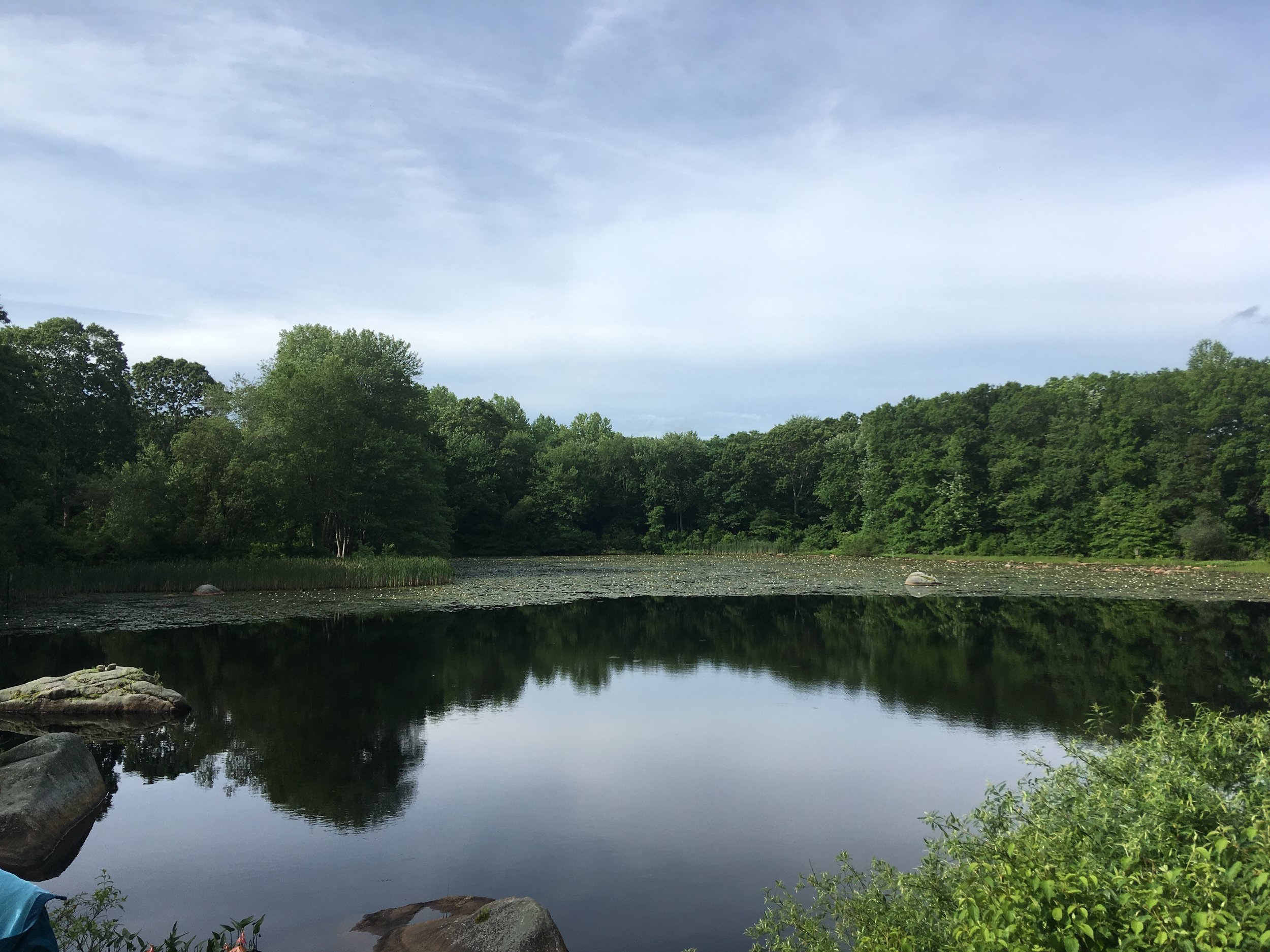 Pond at Arboretum at Connecticut College