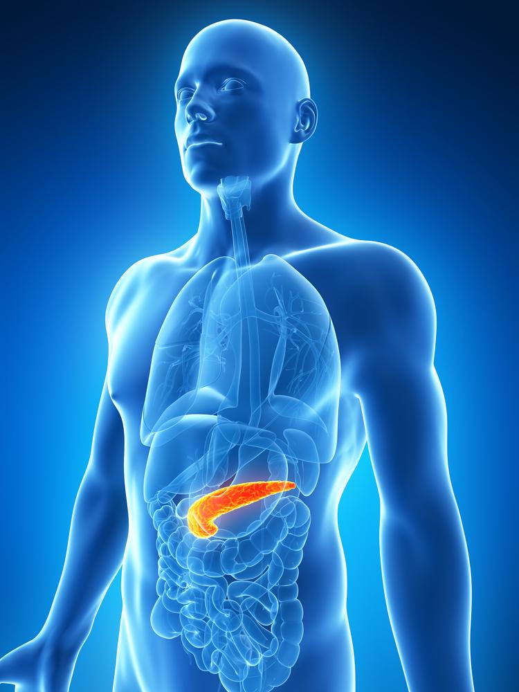 A&P pancreas shutterstock_127654280.jpg