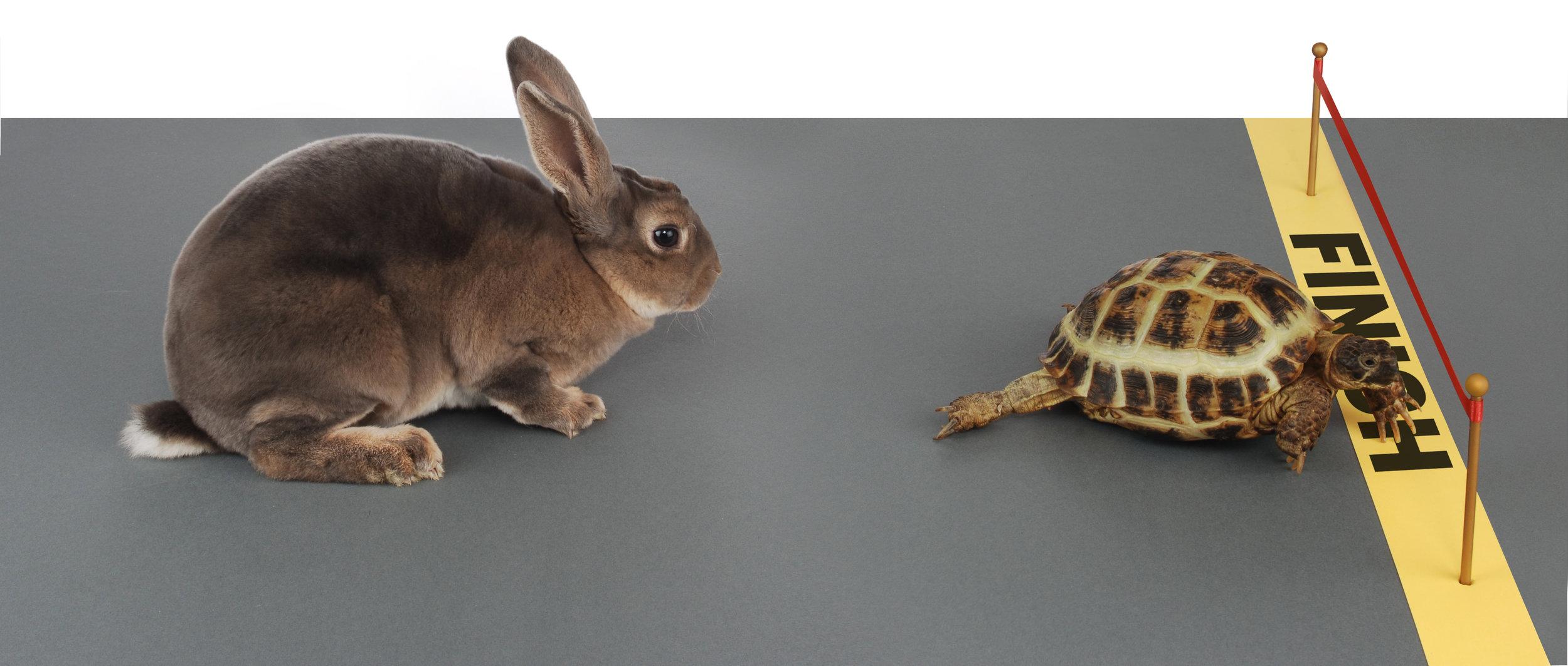 Tortoise and hare 1 shutterstock_2179251.jpg
