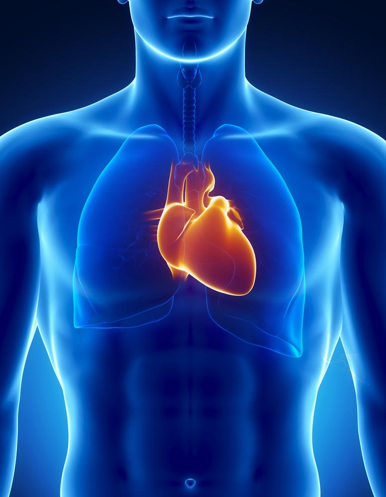 A&P heart shutterstock_82159072.jpg