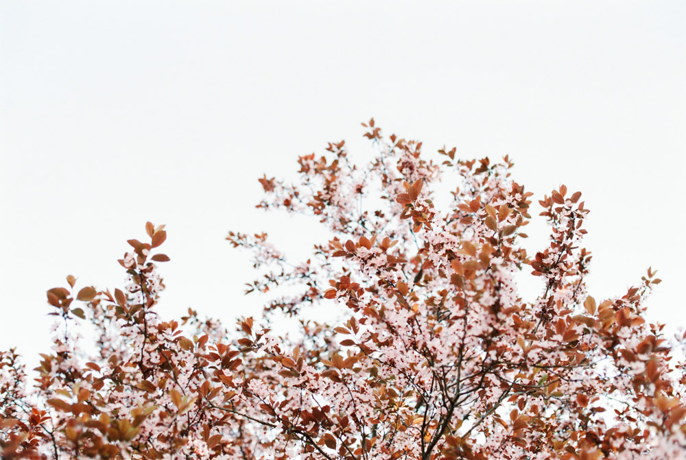 Vienna Portraits   Karlsplatz, Vienna   Michelle Mock Photography   Vienna Photographer   Canon 1V   Fuji400H