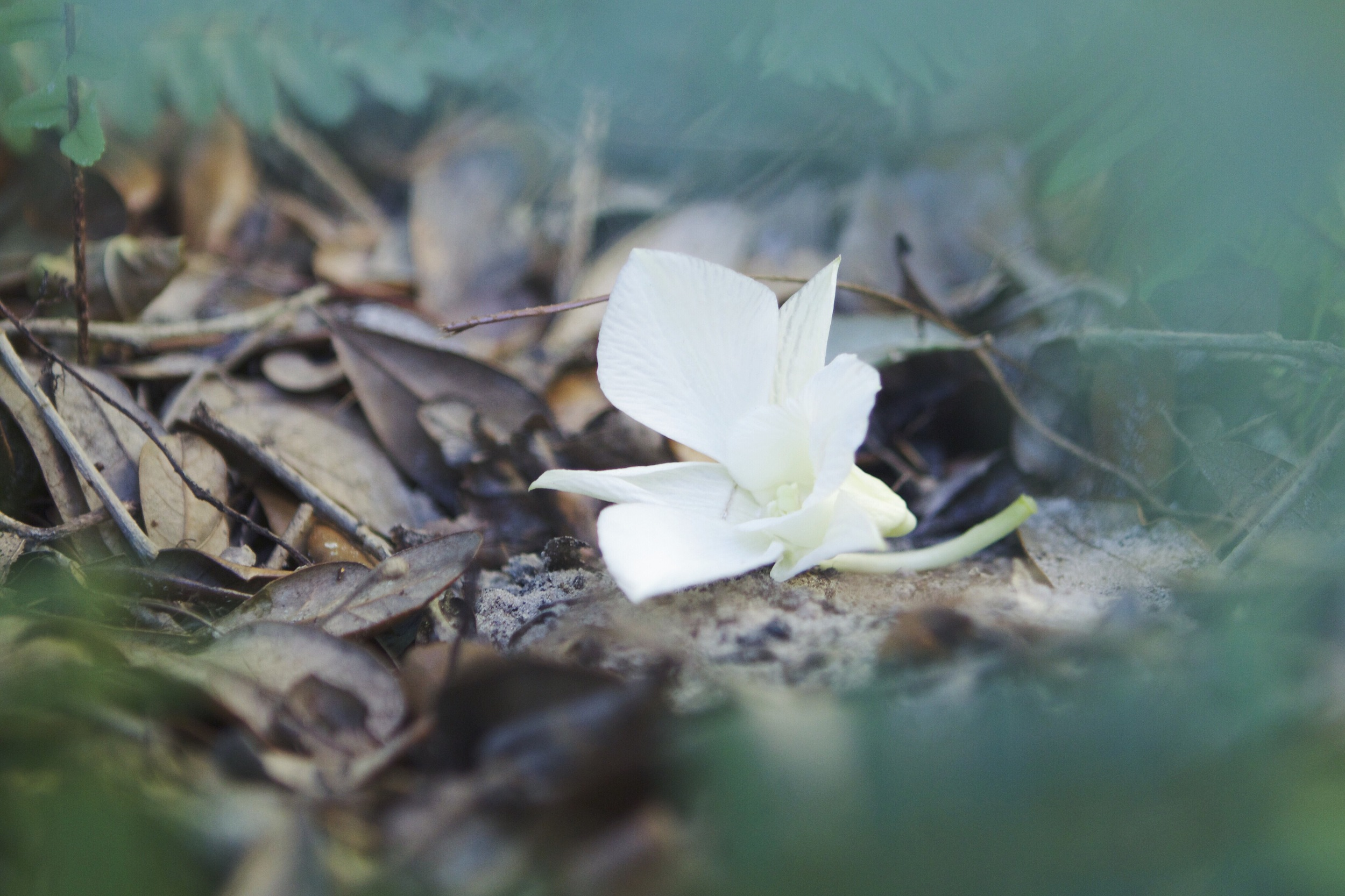 Baby #3's little grave marked with a flower