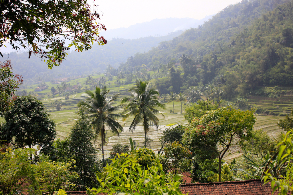Rice terraces in Cianjur, Java.