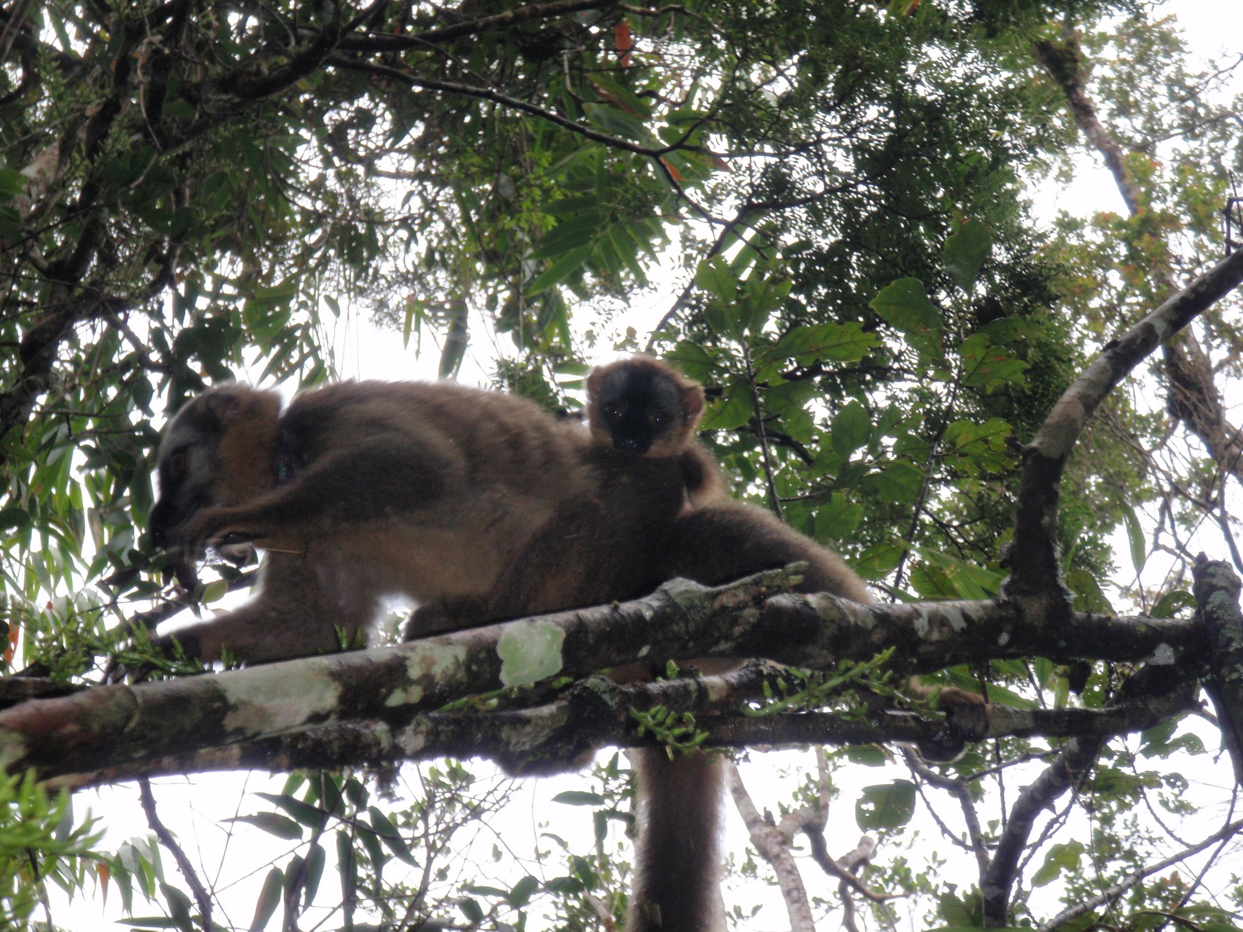 Madagascar 003.jpg