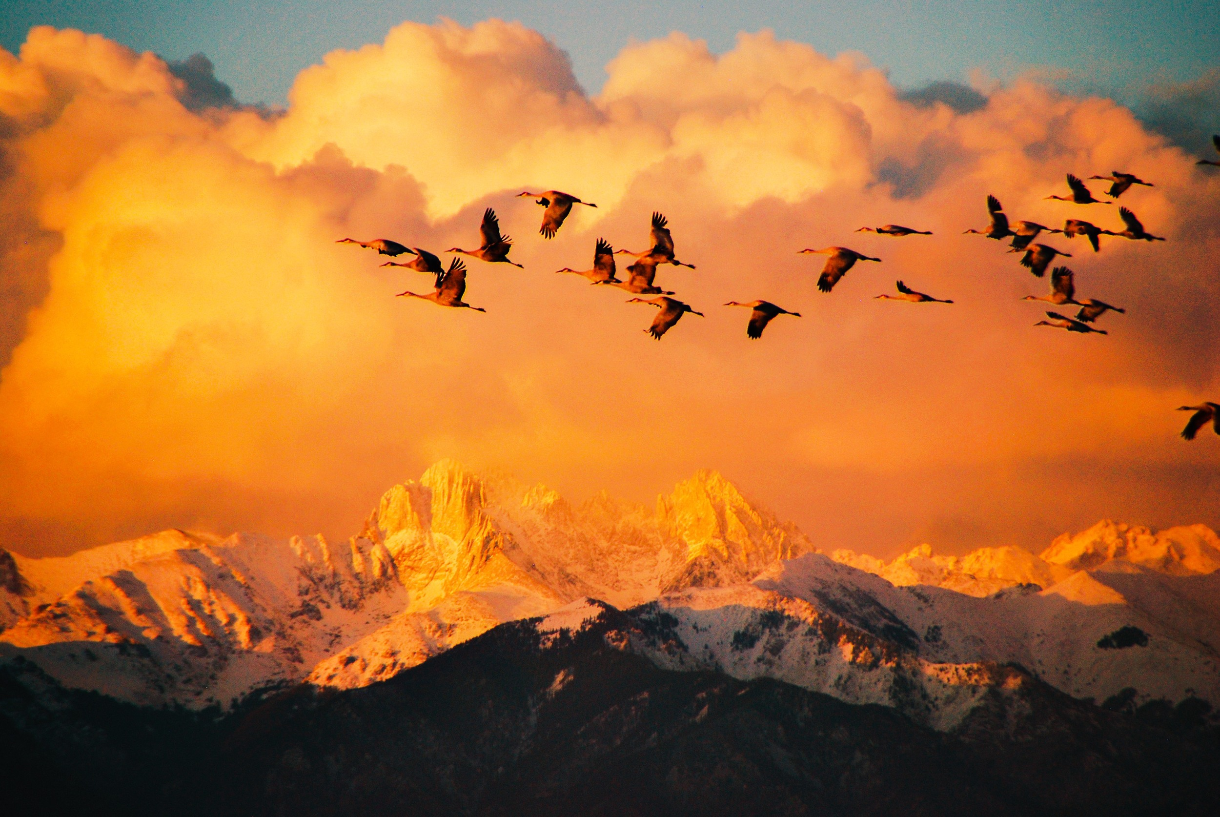 Sandhill Cranes Fly Over Great Sand Dunes National Park