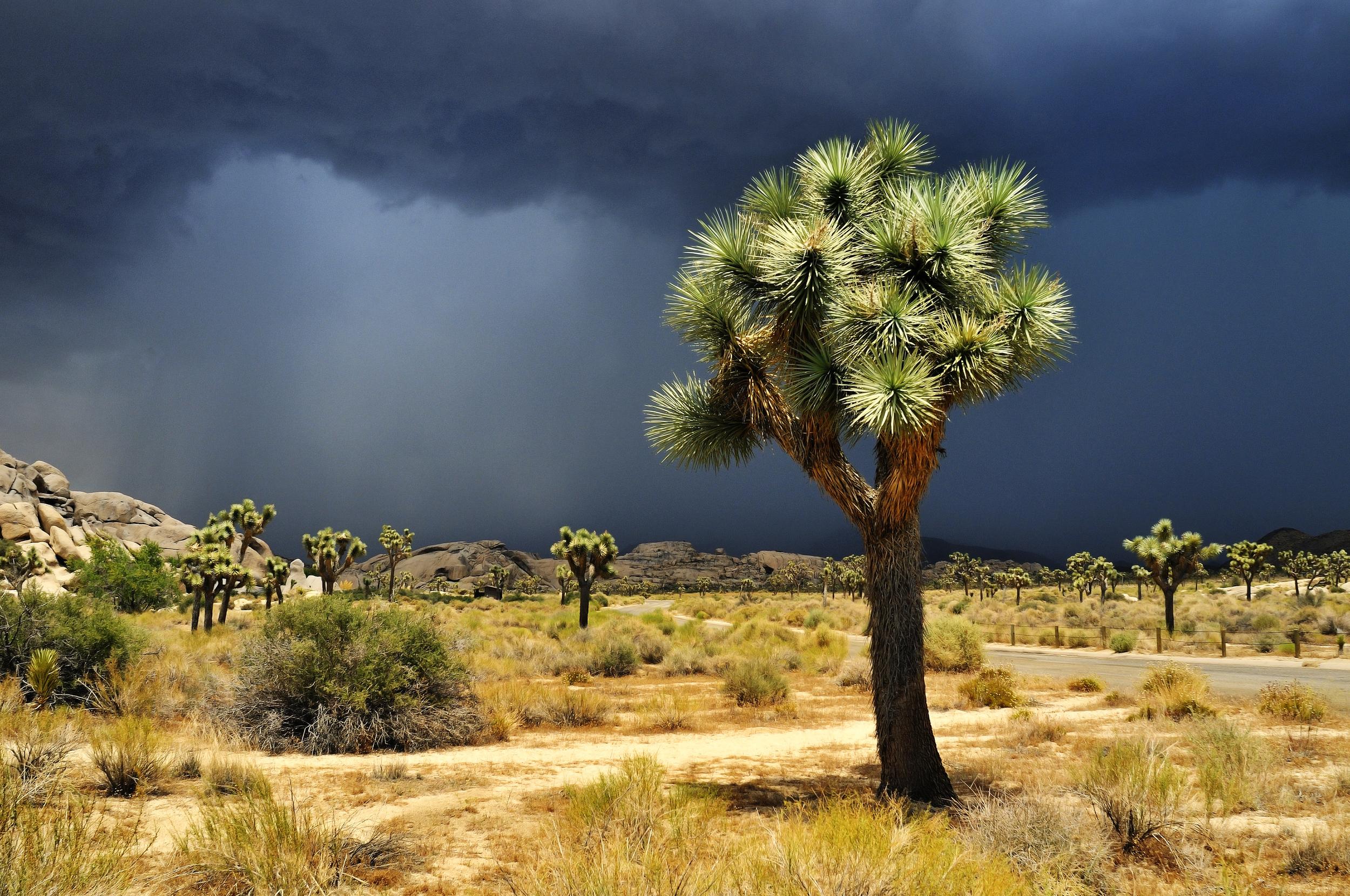 A Storm Passes Through Joshua Tree National Park