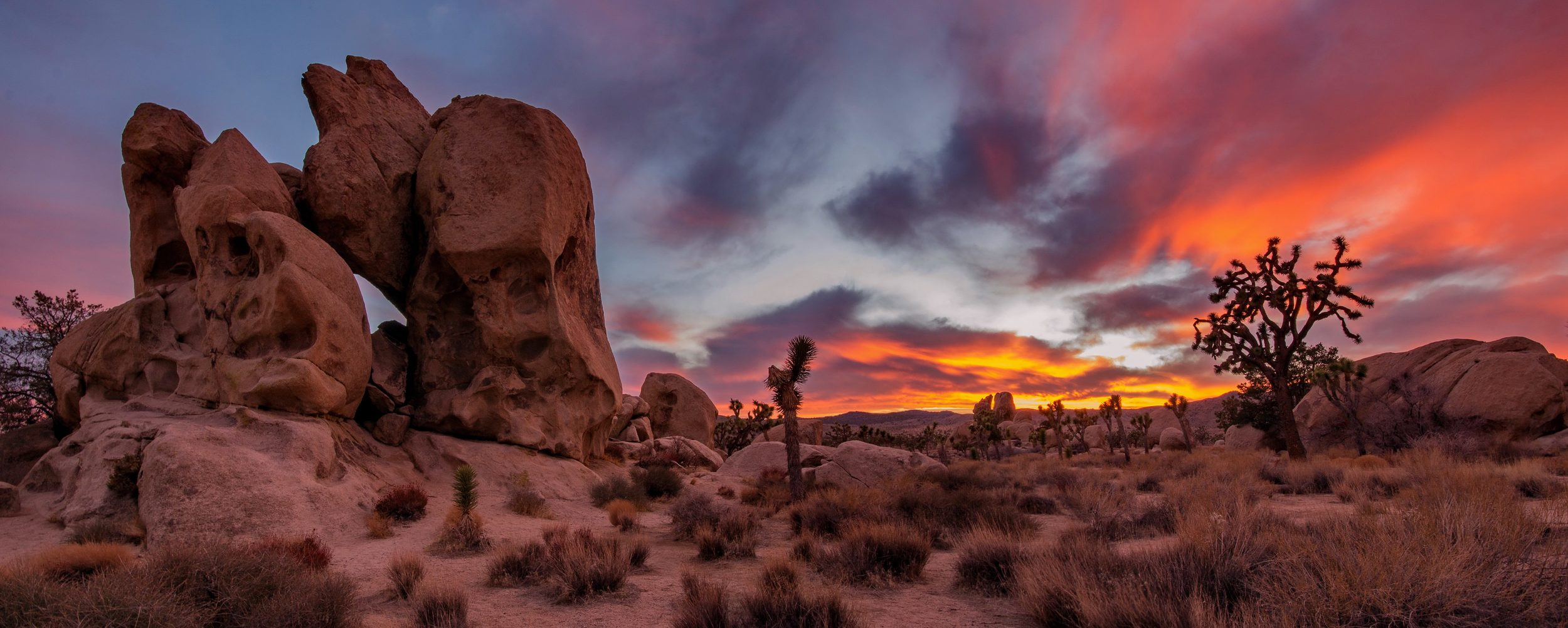 Joshua Tree National Park At Sunset (Photo: Namolik Design and Photography/Shutterstock)