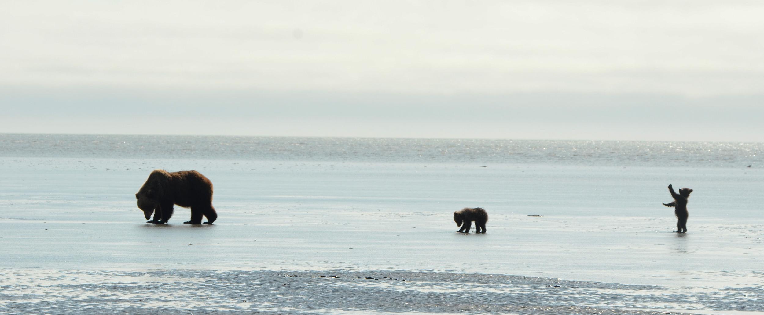 A Mother Brown Bear And Her Cubs –(PHOTO: DAVIDRASMUS/SHUTTERSTOCK)