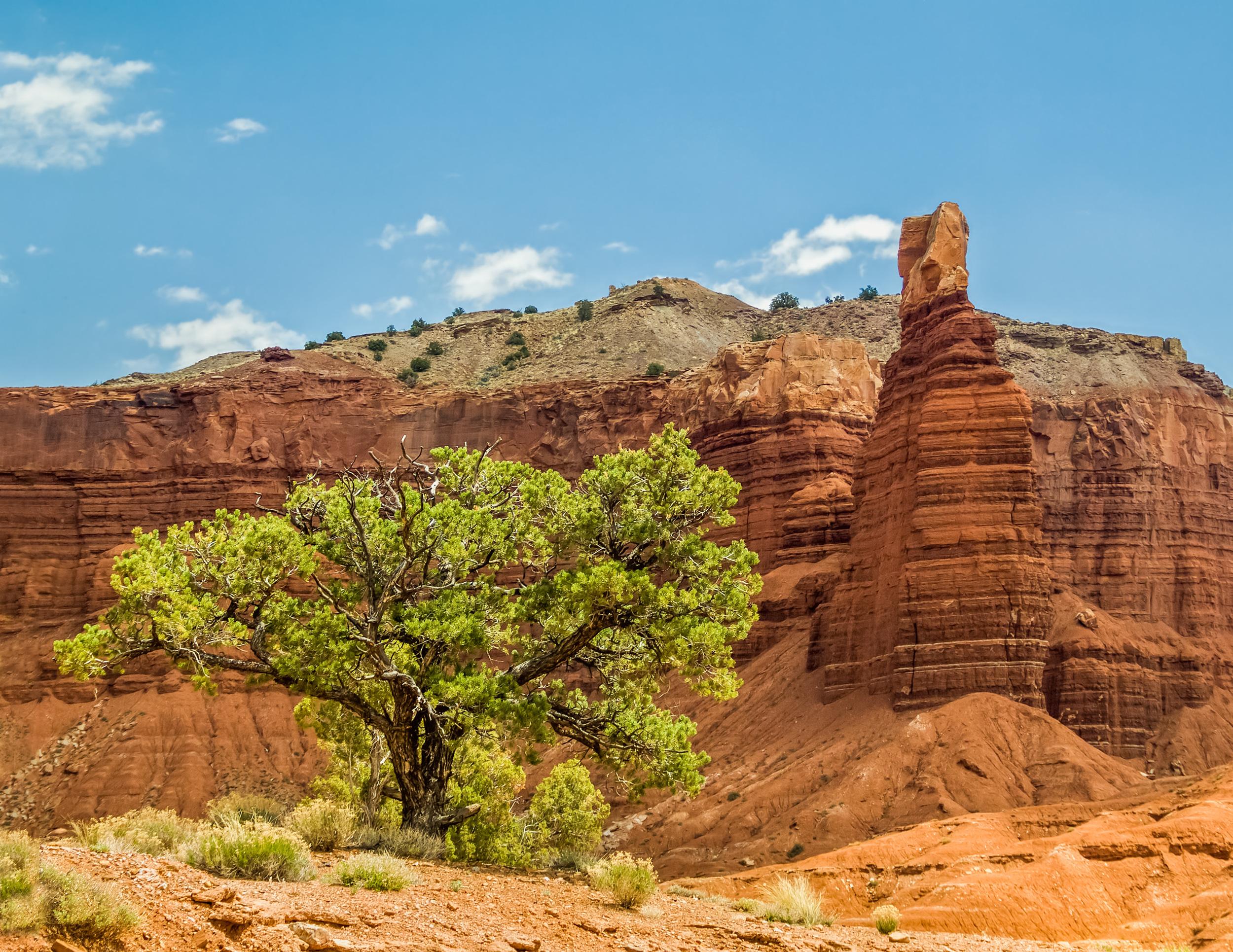 A TREE NEAR CHIMNEY ROCK