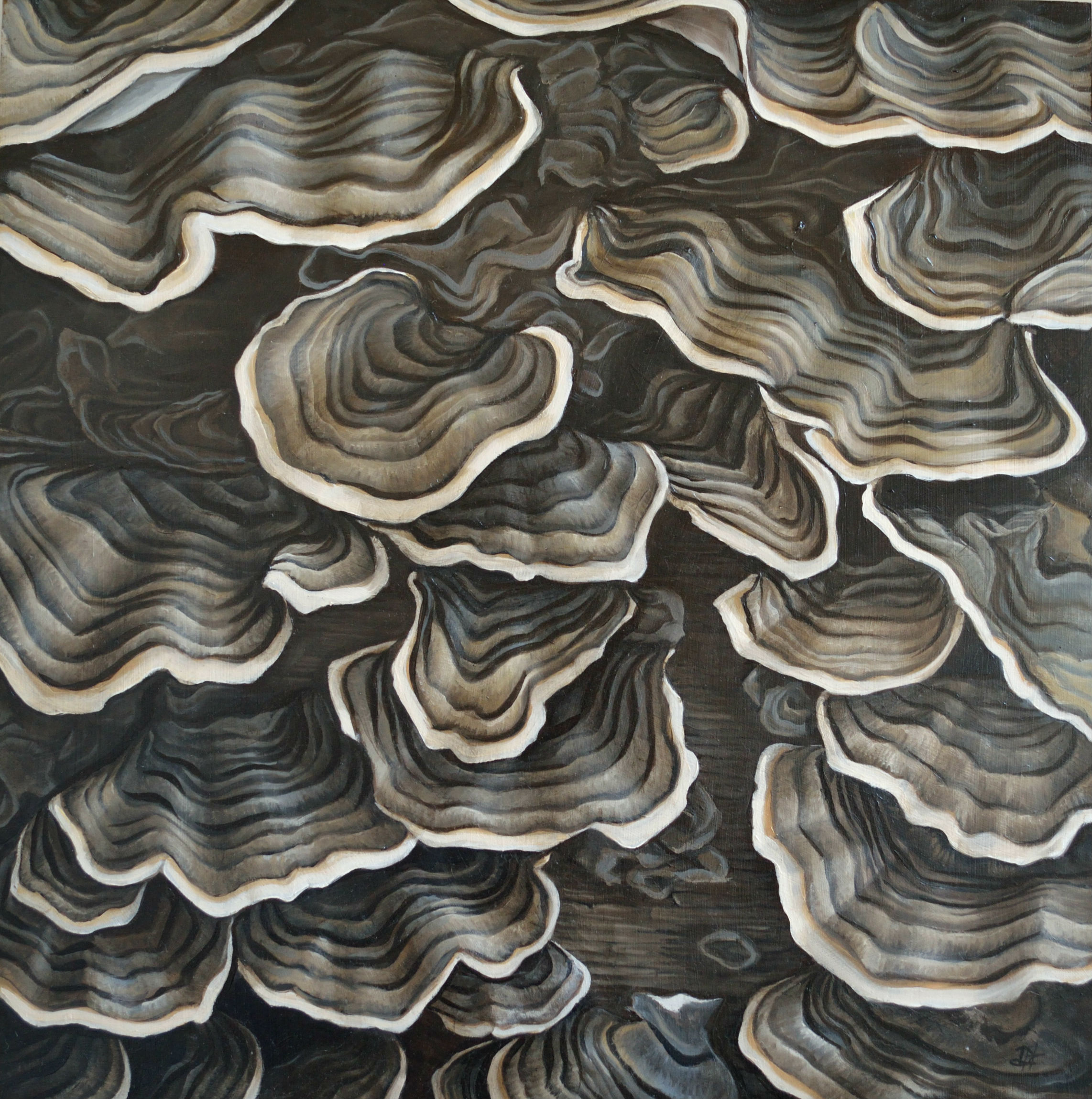 D_Horton_turkey_tail_mushrooms.jpg