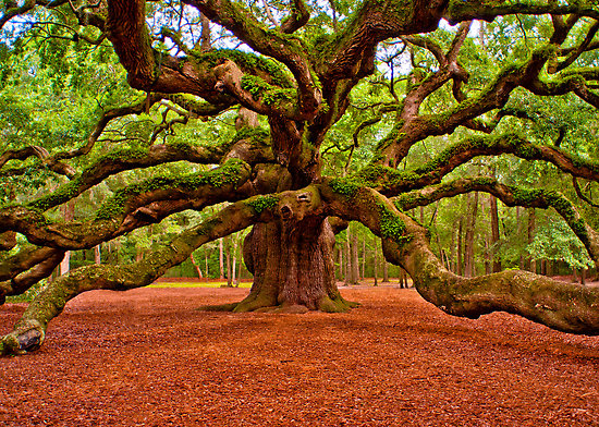 close angel oak.jpg