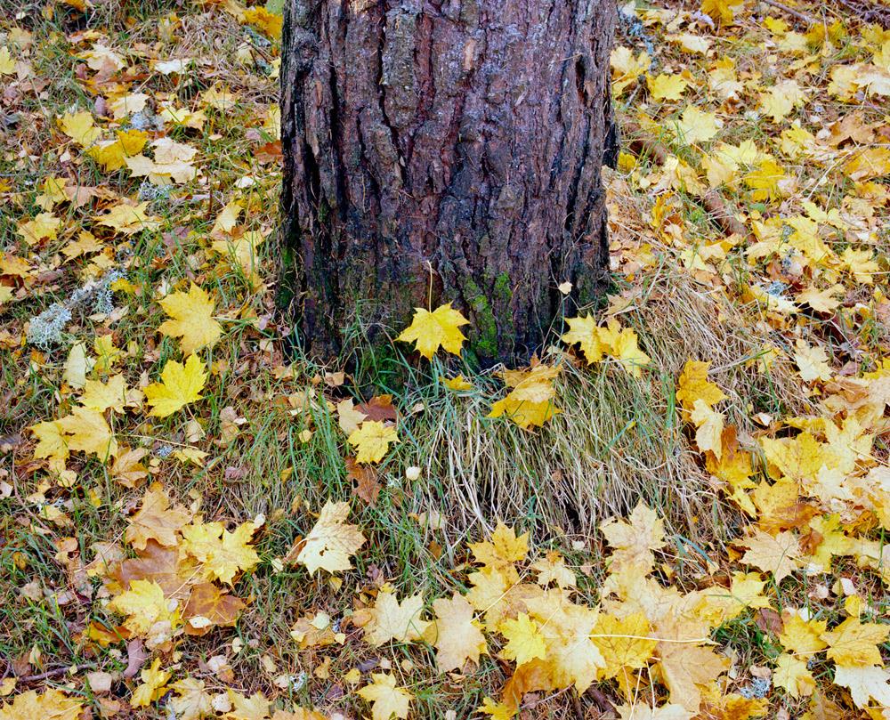Autumn-Leaves-16.jpg