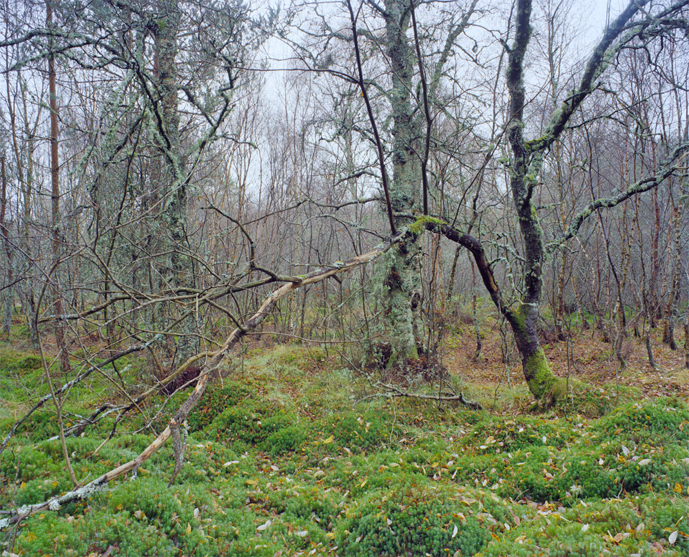 Forest-5-6.jpg
