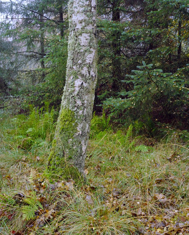 Forest-6-8.jpg