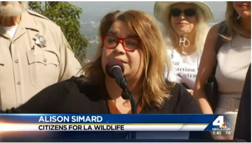 """Developments in the Santa Monica Mountains, from Coldwater Canyon to Beverly Glen to Mulholland Drive, have chipped away at wildlife roaming territory for decades. That's why wildlife in Los Angeles is forced into residential areas where they are feared,"" said Alison Simard of the Citizens for Los Angeles Wildlife. ""We've been incrementally giving away the space that are the lungs of our city,"" said Simard. ""Progress isn't progress when we're destroying the very environments that keep us safe."""